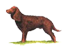 The Wisconsin State dog is the American Water Spaniel.