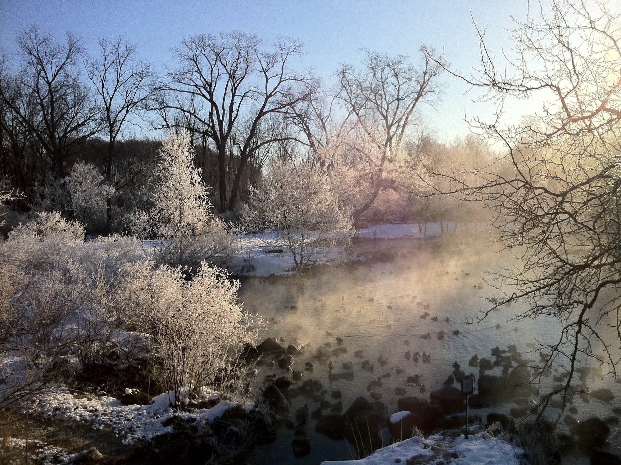 Hoarfrost at Duck Pond in March 3, 2013.