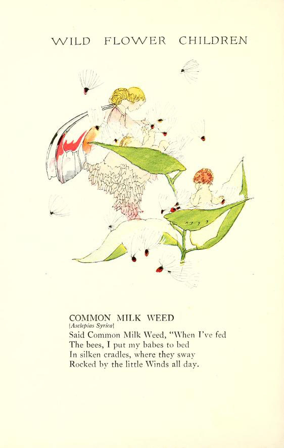1918 Common Milkweed Wild Flower Children by Elizabeth Gordon with illustration by Janet Laura Scott.