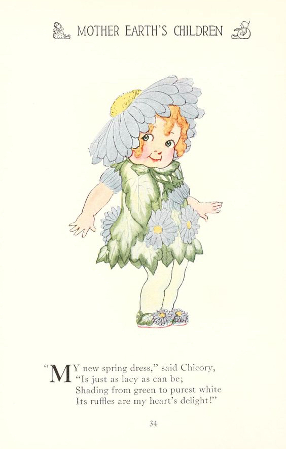 Chicory by Elizabeth Gordon with illustration by  M. T. (Penny) Ross.