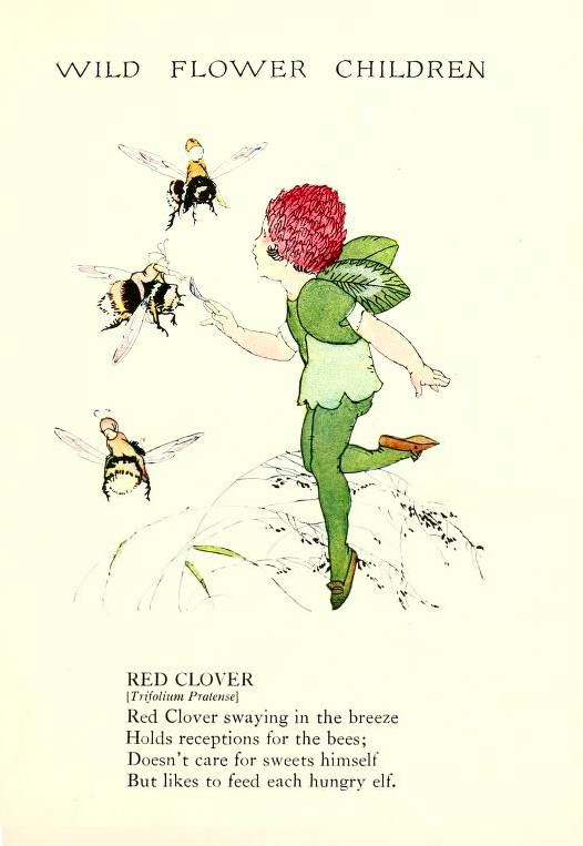 Red Clover Wild Flower Children by Elizabeth Gordon with illustration by Janet Laura Scott.